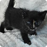 Adopt A Pet :: Maya - Shreveport, LA
