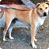 Adopt A Pet :: Hatchi - Gilbert, AZ