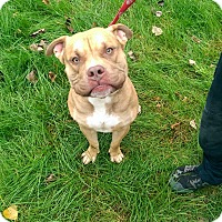 Adopt A Pet :: George - Berlin, CT