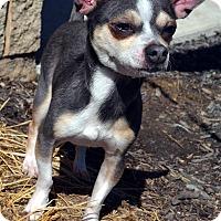 Adopt A Pet :: Arthur - Bridgeton, MO