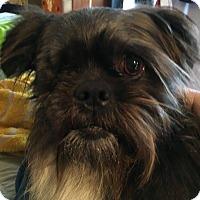 Adopt A Pet :: Toto - Portland, ME