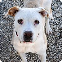 Adopt A Pet :: Peru - Meridian, ID