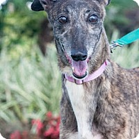 Adopt A Pet :: Wheres D Kia - Gainesville, FL
