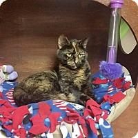 Adopt A Pet :: Cora - Troy, MI