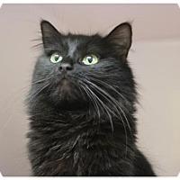 Adopt A Pet :: SHAMROCK - Red Bluff, CA