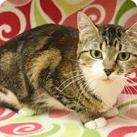 Adopt A Pet :: Kitty - Menominee, MI