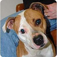 Adopt A Pet :: Alice - Nashville, TN