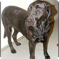 Adopt A Pet :: Lucy - Arlington, TX
