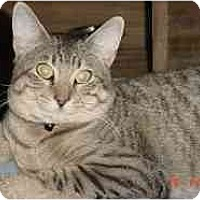 Adopt A Pet :: Ditto - Pasadena, CA