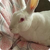 Adopt A Pet :: Sam - Williston, FL