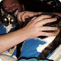 Adopt A Pet :: Zorra - McDonough, GA