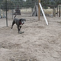 Adopt A Pet :: Johnny - Pie Town, NM