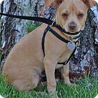 Adopt A Pet :: Chance - Simi Valley, CA