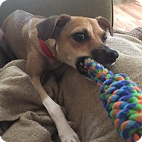 Adopt A Pet :: Jack in New Orleans - Houston, TX
