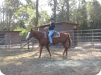 Quarterhorse/Paint/Pinto Mix for adoption in Cantonment, Florida - Trouble
