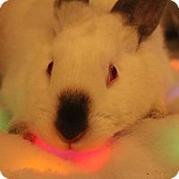 Adopt A Pet :: Rhett - Hillside, NJ