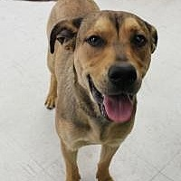 Shepherd (Unknown Type) Mix Dog for adoption in Yukon, Oklahoma - Woody