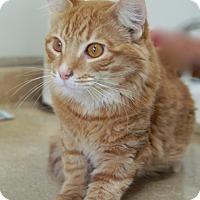 Adopt A Pet :: O'Reilly - Englewood, FL
