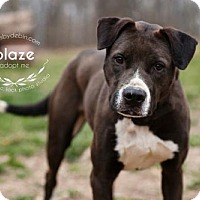 Adopt A Pet :: Blaze - Kansas City, MO