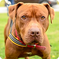 Adopt A Pet :: Baxter - Greenwood, SC