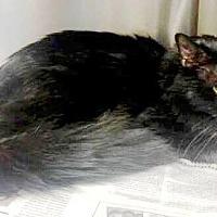 Adopt A Pet :: Knight - Harrisburg, NC