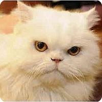Adopt A Pet :: Montecarlo aka Monte - Columbus, OH