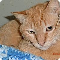 Adopt A Pet :: LANDO - Crescent City, CA