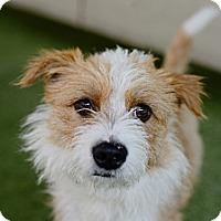Adopt A Pet :: Luke - Mission Viejo, CA