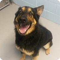 Adopt A Pet :: Kopac - Muskegon, MI