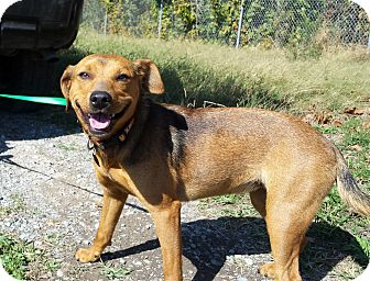 Shepherd (Unknown Type) Mix Dog for adoption in Union City, Tennessee - Charley