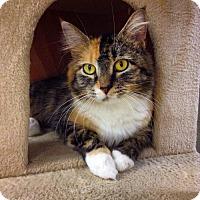 Adopt A Pet :: Vixen - Shaftsbury, VT