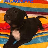 Adopt A Pet :: Christa McAuliffe - Garden City, MI