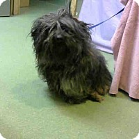 Terrier (Unknown Type, Small) Mix Dog for adoption in San Bernardino, California - URGENT on 3/17 @DEVORE