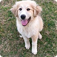 Adopt A Pet :: Eloise - Tulsa, OK