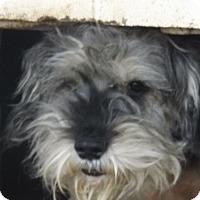 Adopt A Pet :: scrappy - Zaleski, OH