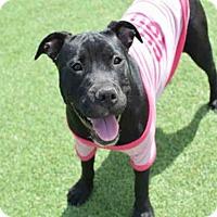 Adopt A Pet :: ELLEN - Atlanta, GA