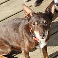 Adopt A Pet :: Burt - Hayes, VA