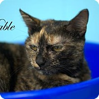 Adopt A Pet :: Mable - Middleburg, FL