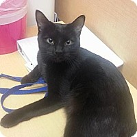Adopt A Pet :: Inket - Sunderland, ON