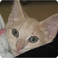 Adopt A Pet :: Rhonda - Port Republic, MD