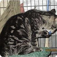 Adopt A Pet :: Jeremiah - Sterling Hgts, MI