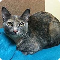Adopt A Pet :: Monroe - Sterling Hgts, MI