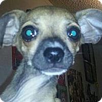 Adopt A Pet :: Bambi - Garden Grove, CA