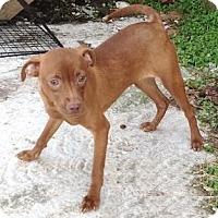 Adopt A Pet :: Hannah - Moulton, AL
