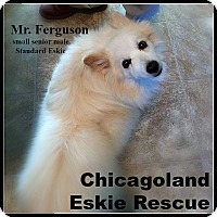 Adopt A Pet :: Ferguson - Elmhurst, IL