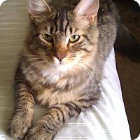 Adopt A Pet :: Habanero - Alva, OK