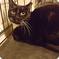 Adopt A Pet :: Jessamine - Baltimore, MD