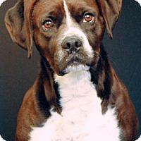 Adopt A Pet :: Davey - Newland, NC