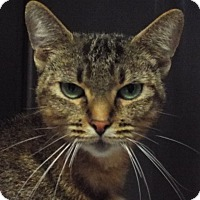 Adopt A Pet :: Lilac - Grants Pass, OR