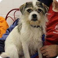 Adopt A Pet :: Abbey - Elyria, OH
